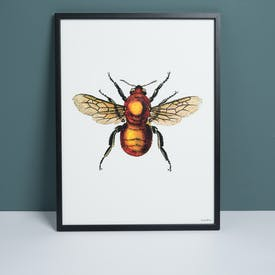 Framed Bee Print